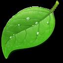 Coda - Icon